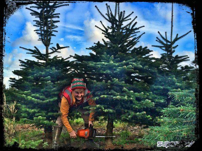 cut_tree4